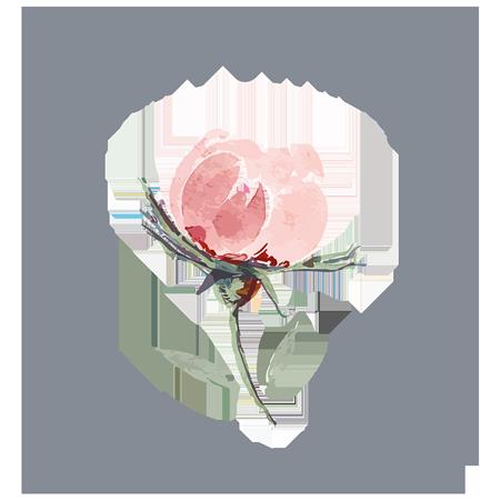 Logo mit Rose von Alicia Utrillas Photography Portrait- und Hochzeitsfotografin aus Frankfurt auf http://www.aliciautrillas.de